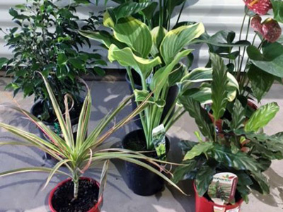 Indoor Plants image